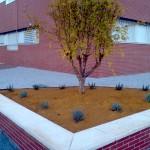 Servicios de jardineria y jardineros en Madrid