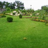 Servicios de jardineria en Madrid realizados por jardineros profesionales de Serlingo