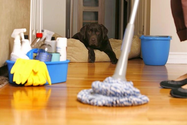 limpieza de la casa con mascotas